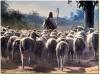 """Renungan harian 21 April 2013- """"Domba-domba-Ku mendengarkan suara-Ku dan Aku mengenal mereka dan mereka mengikutAku,"""""""